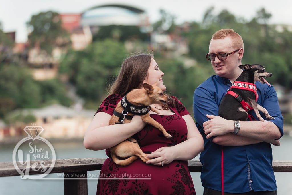 Pre-wedding Engagement Photos at Brisbane Powerhouse with two Funny Chihuahuas